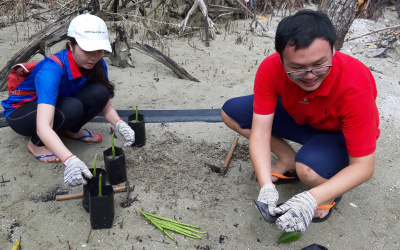 Beach Cleaning & Seed Harvesting in Bagan Lalang