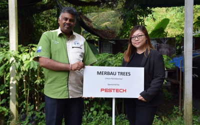Donation of 100 Merbau Trees to MNS